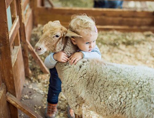 Quels laits pour nos bébés ? (2ème Partie)