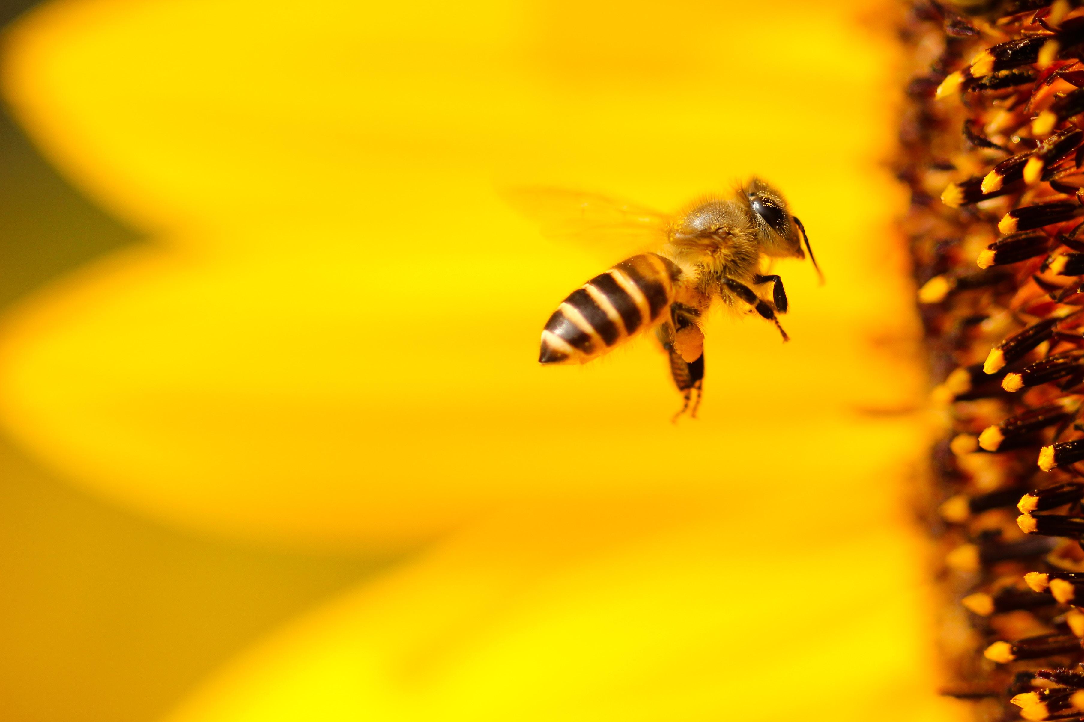 ruche abeilles